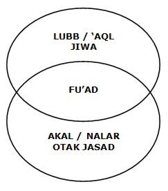 irisan lubb-fu'ad-akal