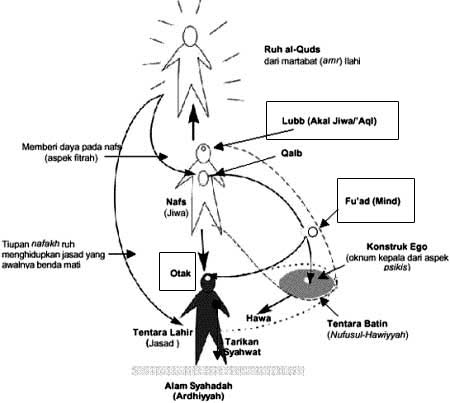struktur insan dan aql nya